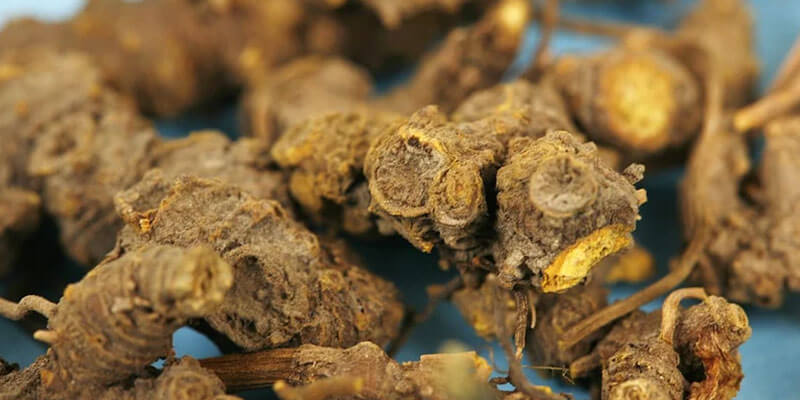 goldenseal-beneficii-proprietati-natural-supliment-alimentar-antibiotic