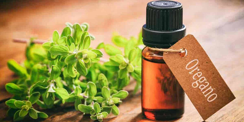 ulei-oregano-antibiotic-natural-antibacterian